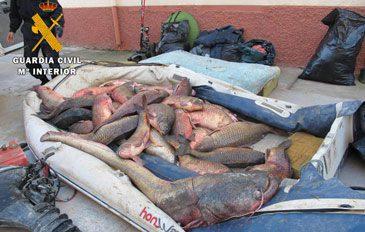 """El PAR celebra el apoyo de las Cortes a """"su moción"""" para evitar la pesca furtiva en las riberas del Ebro, y fomentar la pesca deportiva y recreativa de Aragón como verdadero motor de desarrollo"""
