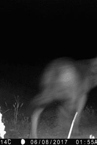 El PAR apoya a los ganaderos de Monegros y plantea la captura del lobo hasta que haya garantías totales de convivencia