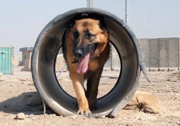 Jaraba organiza el I Certamen Provincial de Perros de Trabajo y Utilidad