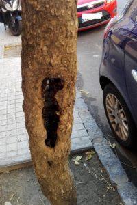 PAR Zaragoza denuncia el pésimo estado del arbolado en Calle Monasterio de Siresa